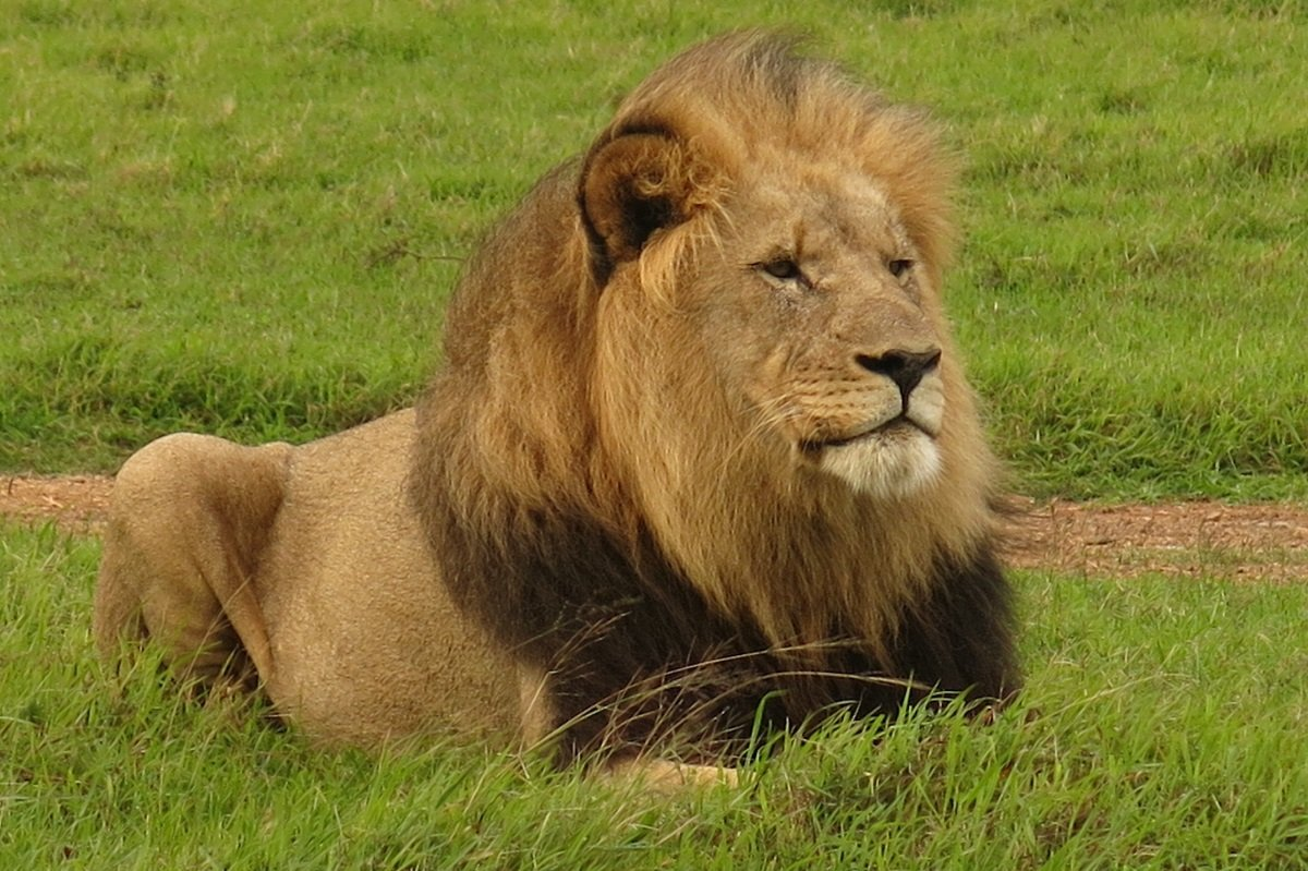 Safari I Kruger Park And Holiday In Cape Town Click For