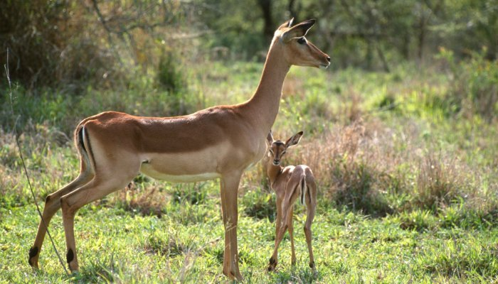 Young animals in Kruger