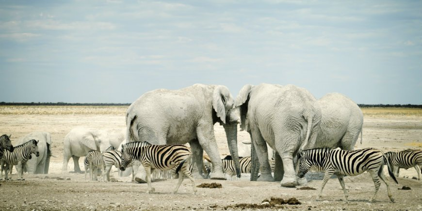 the best safari destinations in africa get inspiration here!
