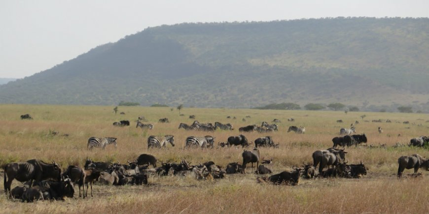 Serengeti in June