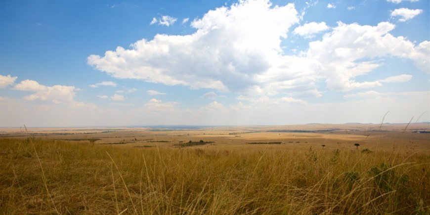 Masai Mara's savanna in July