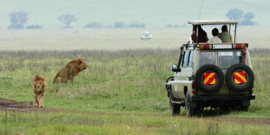 Lion and safari car