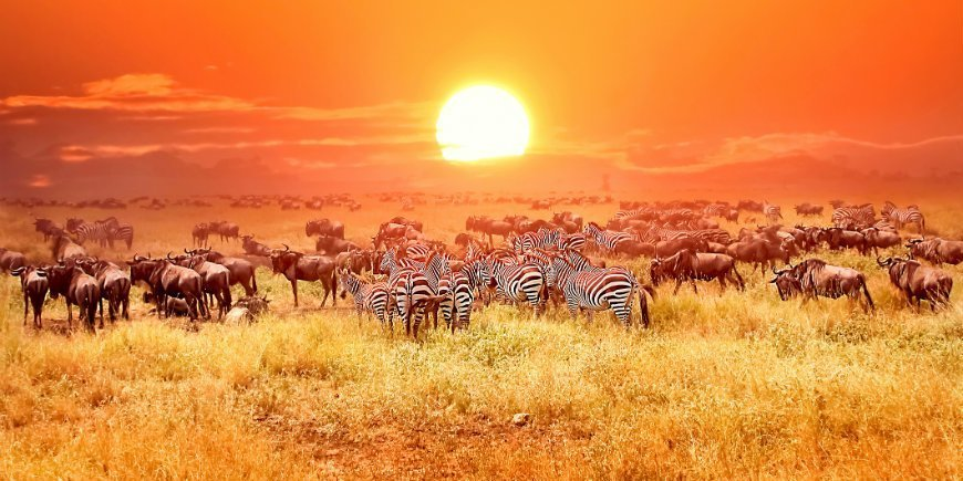 7 interesting facts about Tanzania – Did you know this?