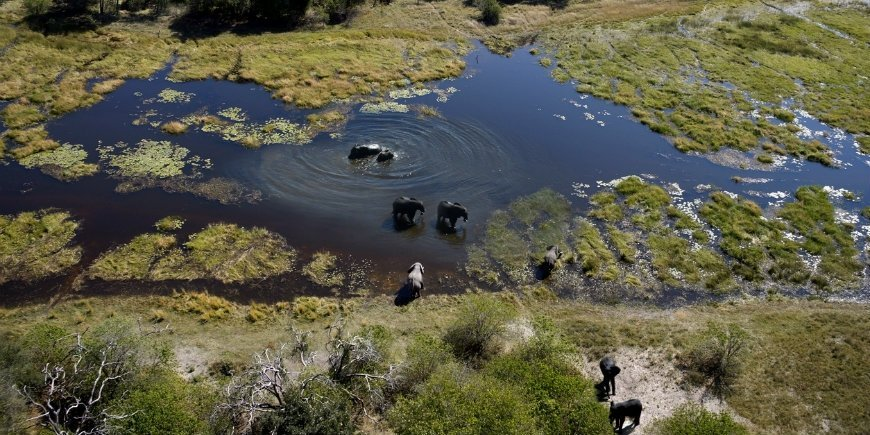 Elephants in the Okavango Delta
